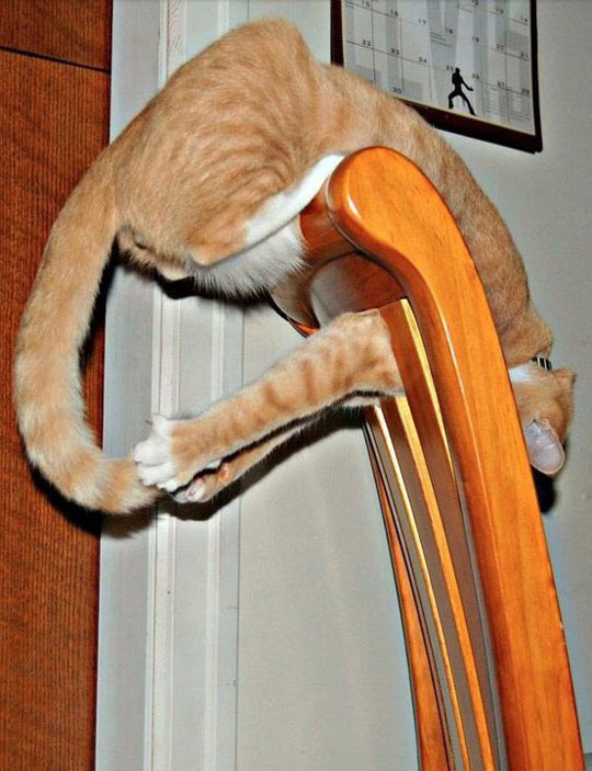 funny-picture-funny-cat-chair-tail-playing