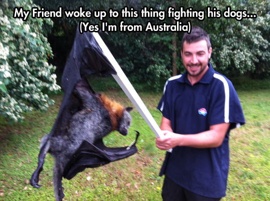 funny-picture-giant-bat-dog-fight-flying-fox