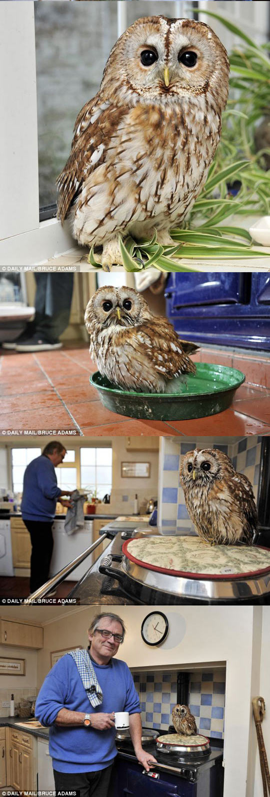 funny-picture-guy-owl-helping-chores-man-afraid-outdoors