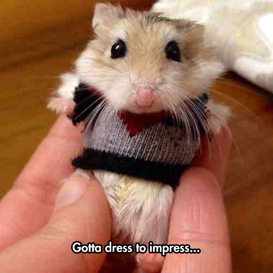 funny-picture-hamster-sweater-small-clothes