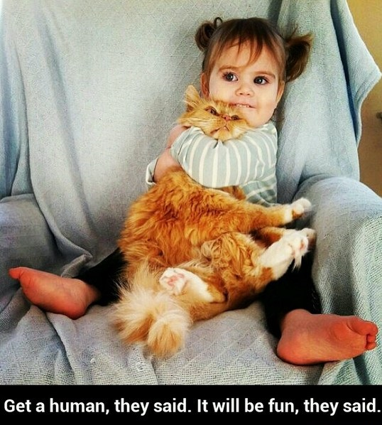 funny-picture-human-cat-girl