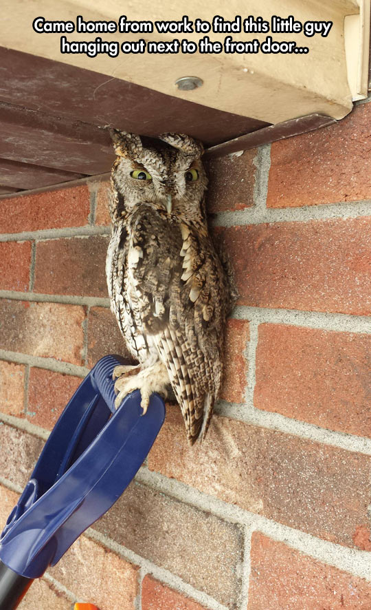 funny-picture-owl-hiding-roof-home-work