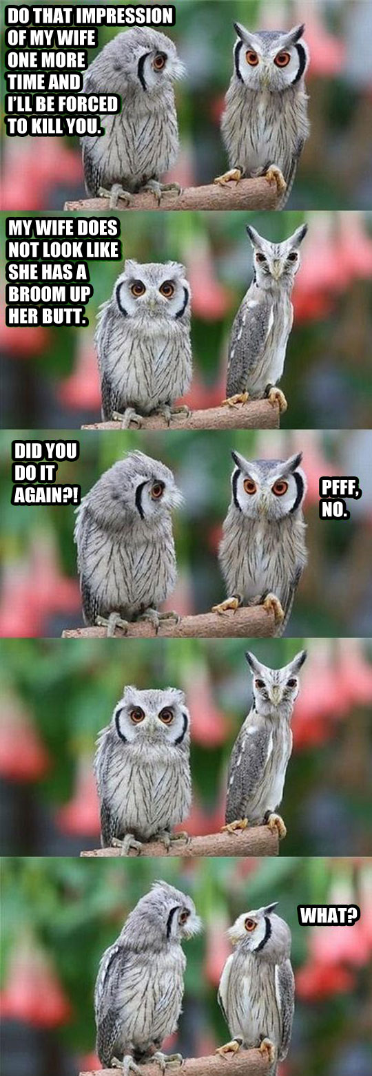 funny-picture-owl-making-fun-skinny