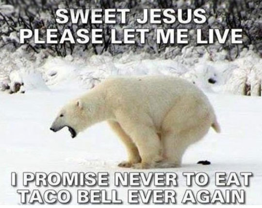 funny-picture-polar-bear-pooping-Taco-Bell