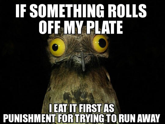 funny-picture-pooto-bird-quote-plate-food