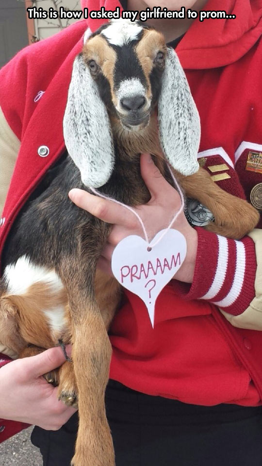 funny-picture-prom-proposal-using-goat-genius