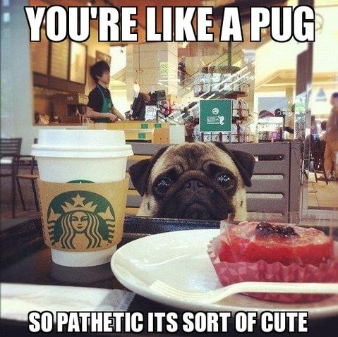 funny-picture-pug-pathetic-cute
