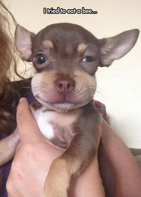 funny-picture-puppy-dog-bee-smile