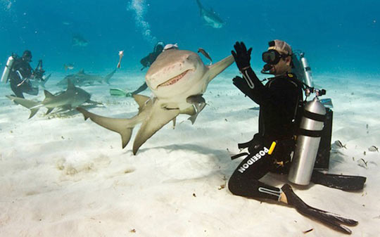 funny-picture-shark-diver-high-five-ocean-fish