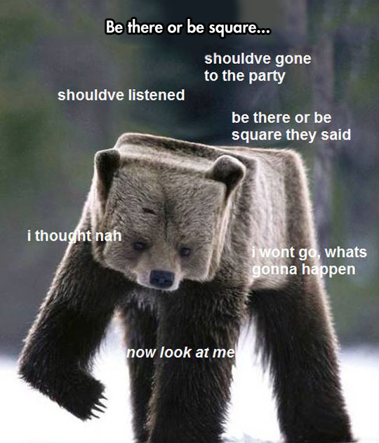 funny-picture-square-bear-comments-thoughts