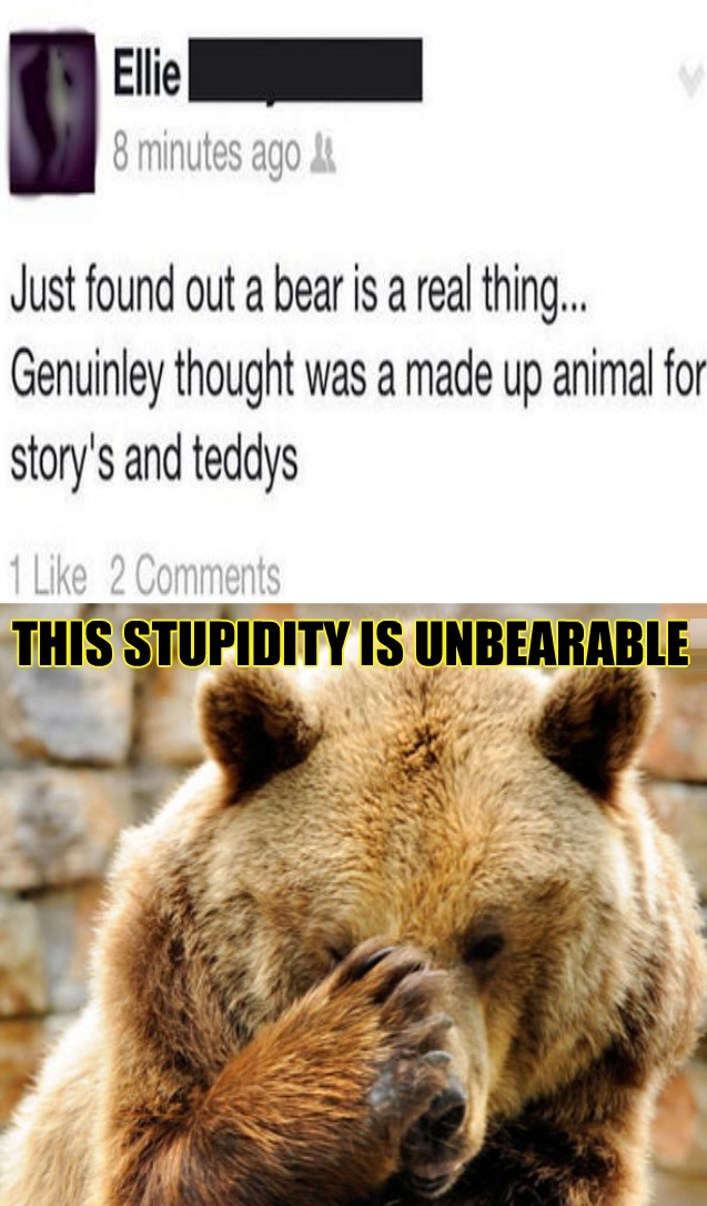funny-picture-stupid-bear-facepalm