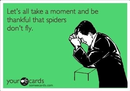 funny-picture-thanks-spiders-fly