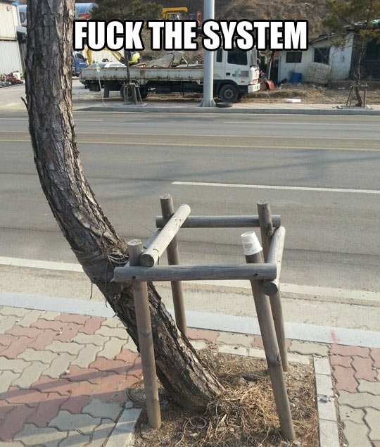 funny-picture-tree-wooden-cage-escaping-rebel