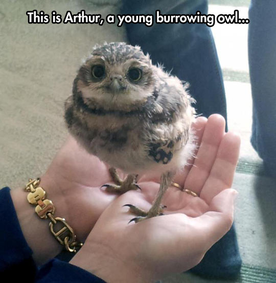 funny-picture-baby-bird-owl-hand