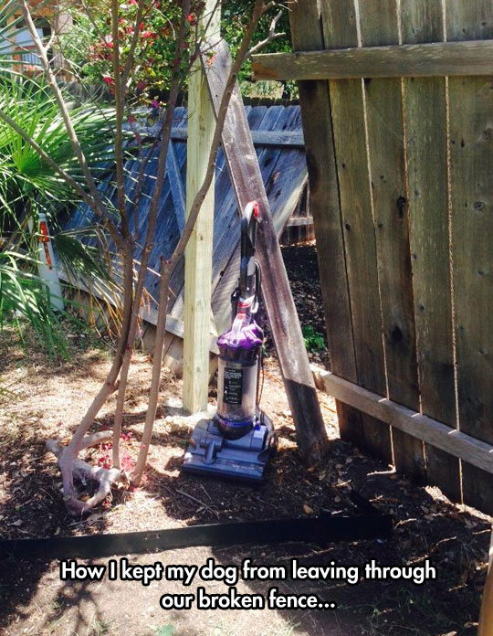 funny-picture-backyard-vacuum-fence-hole