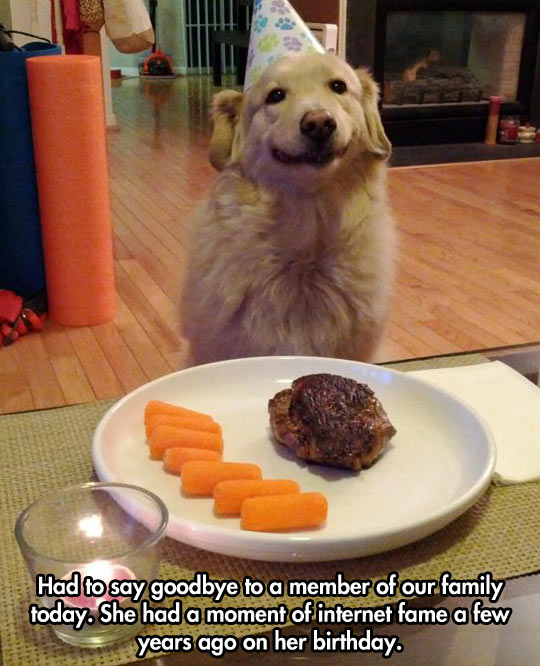 funny-picture-birthday-dinner-dog-meat
