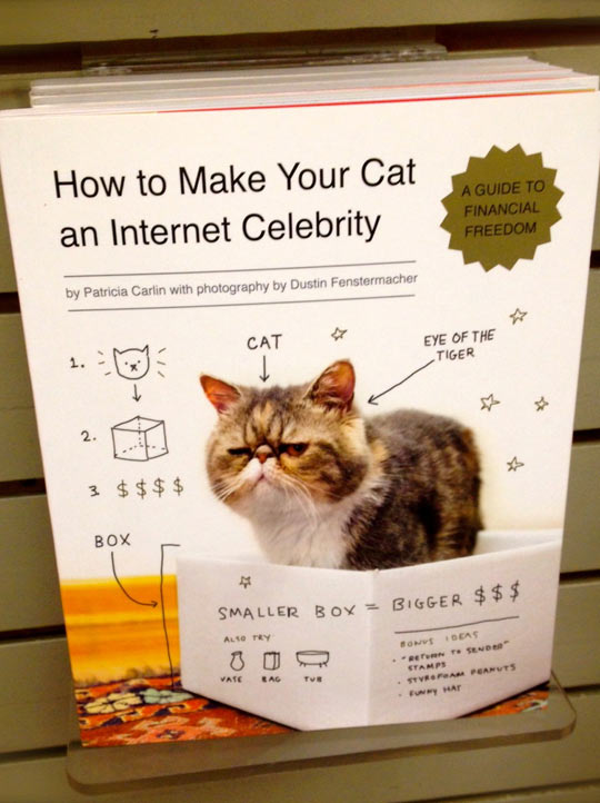 funny-picture-book-cat-Internet-guide