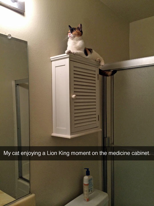 funny-picture-cat-Lion-King-bathroom