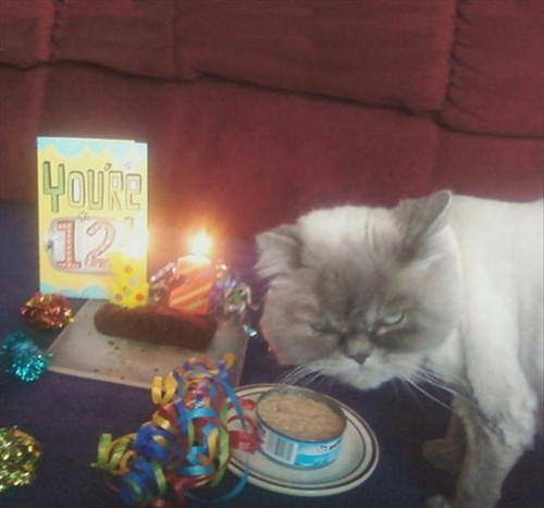 funny-picture-cat-birthday