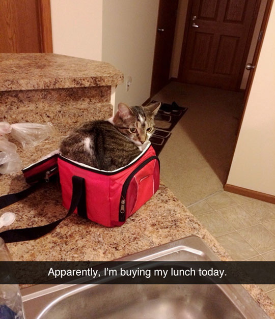 funny-picture-cat-lunch-bag-kitchen