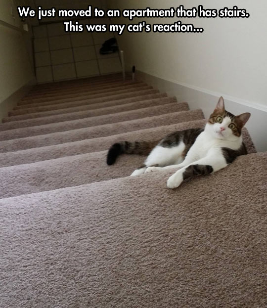 funny picture cat stairs new flat