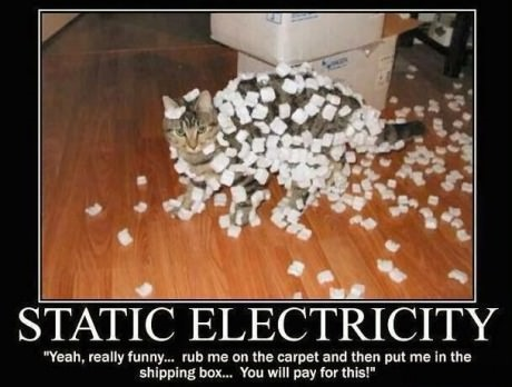 funny-picture-cat-static-electricity