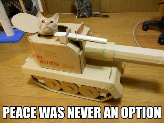 funny-picture-cat-tank-inside-playing