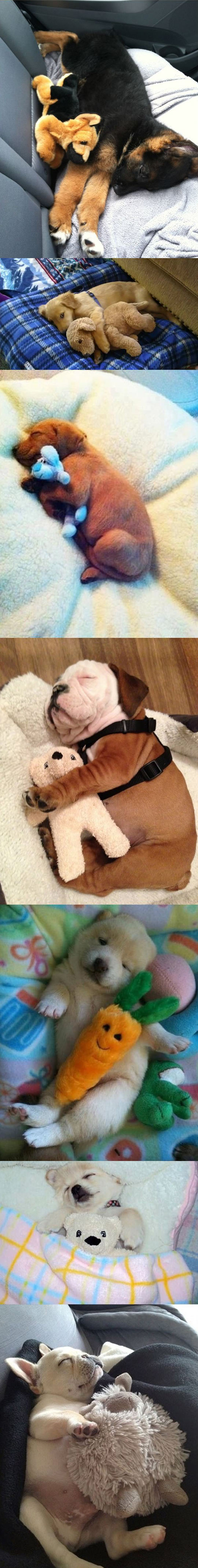 funny-picture-cute-puppy-sleeping-toys-bulldog