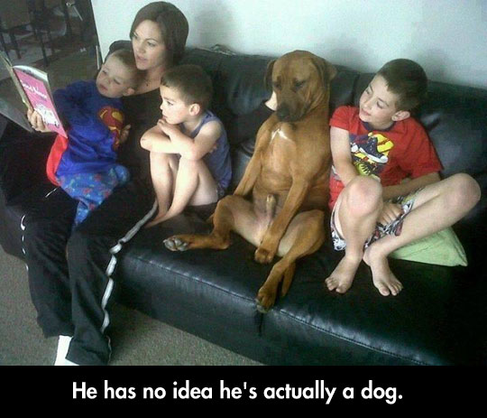 funny-picture-dog-acting-human-children-couch