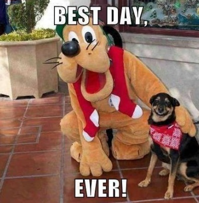 funny-picture-dog-best-day