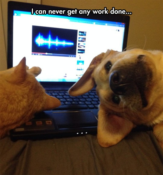 funny-picture-dog-cat-working-laptop