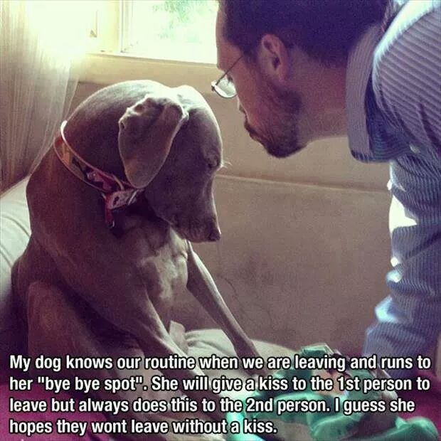 funny-picture-dog-cute-kiss