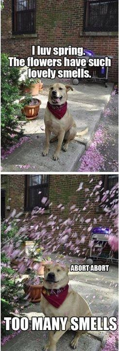 funny-picture-dog-flowers-smell