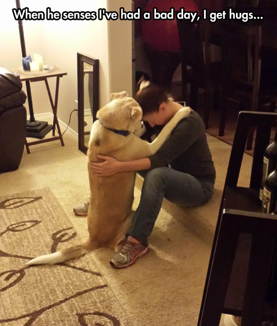 funny-picture-dog-hug-bad-day-cute-moment