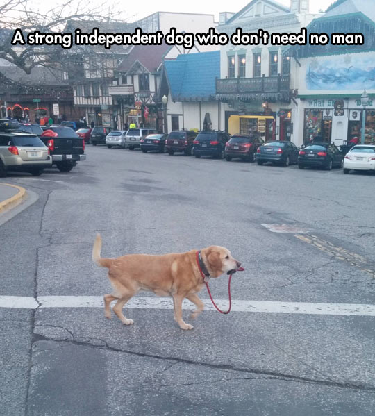 funny-picture-dog-leash-street-crossing-cars