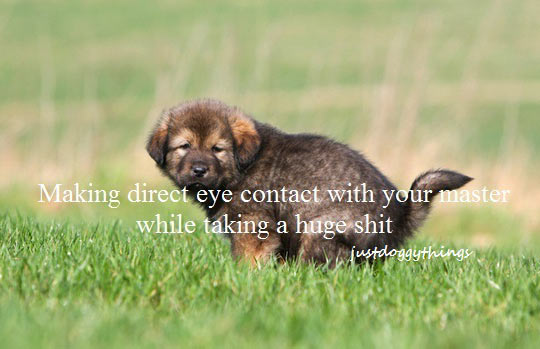funny-picture-dog-making-contact-pooping