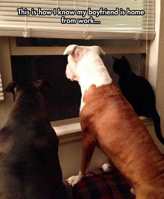 funny-picture-dogs-cat-watching-window