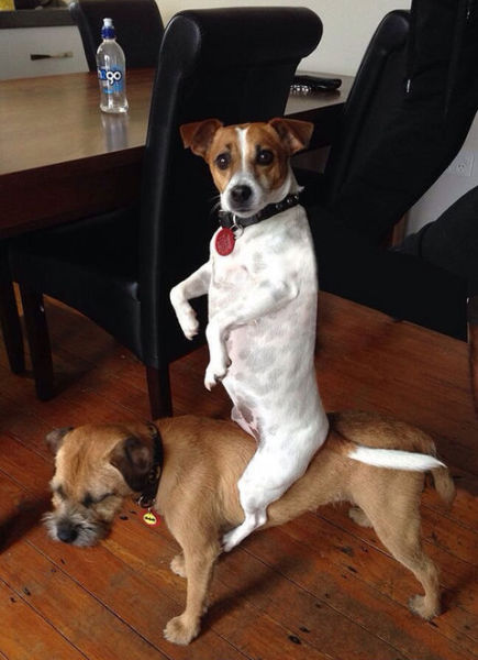 funny-picture-dogs-siting