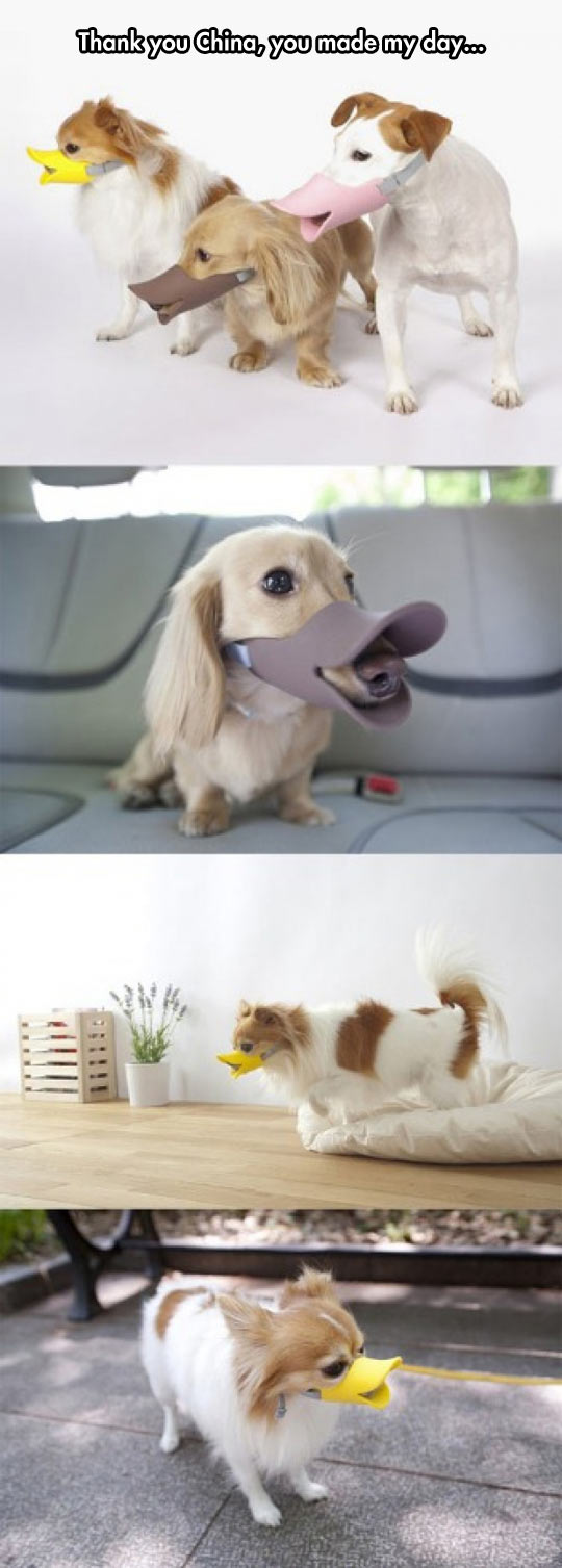 funny-picture-duck-mask-dog-China