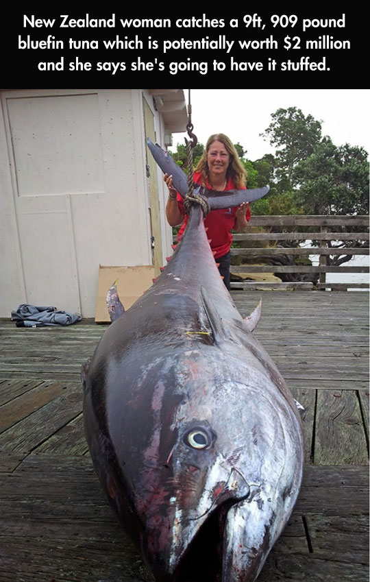 funny-picture-giant-tuna-worth-fishing