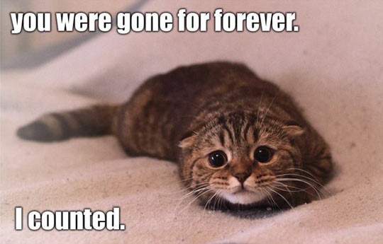 funny-picture-kitty-sad-cat-bed-pillows