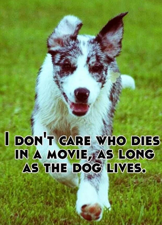 funny-picture-movie-dog-logic-living