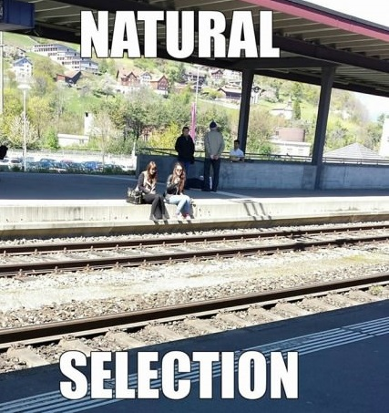funny picture natural selection natural selection at its finest