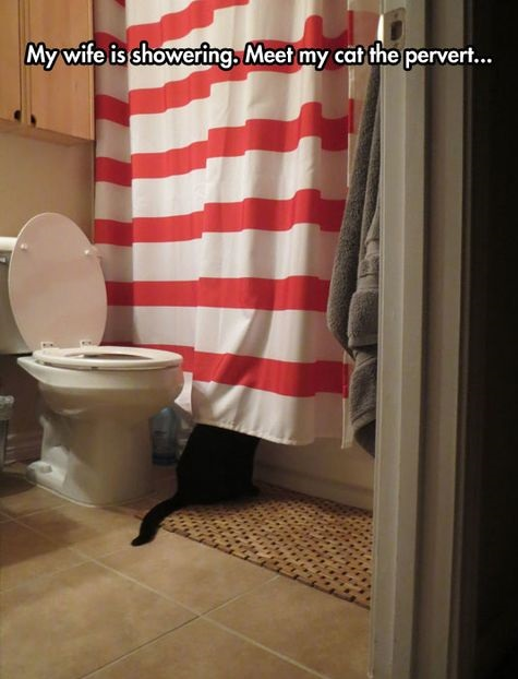 funny-picture-pervert-cat