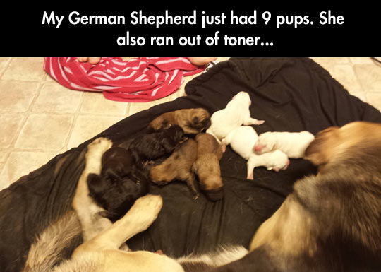 funny-picture-shepherd-dog-babies-colors