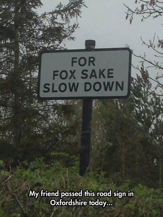 funny-picture-sign-fox-road-slow-down