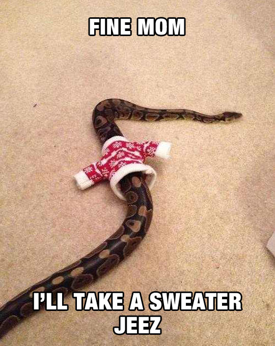 funny-picture-snake-sweater-floor-carpet