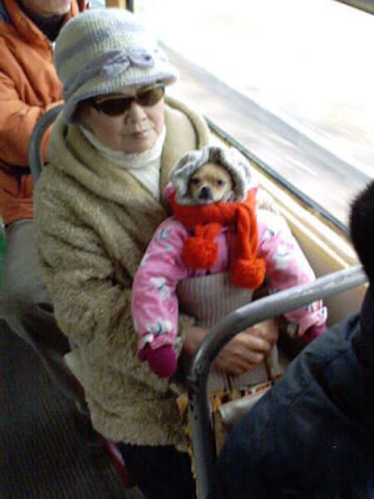 funny-picture-woman-bus-baby-dog-dress