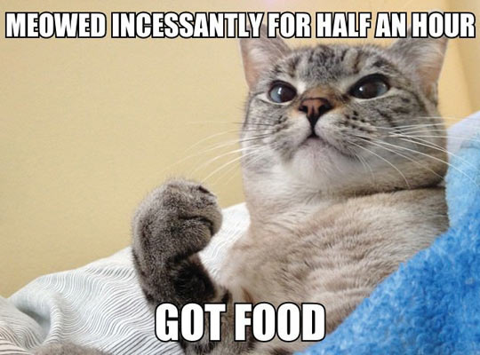 wanna-joke-cat-asking-food-meowed