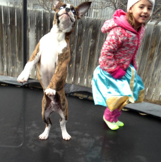 wanna-joke-dog-trampoline-cute-girl